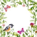 Gränsram med den ängblommor, fågeln och fjärilar vattenfärg arkivfoton