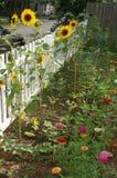 Gränsträdgård längs staketet Arkivfoton