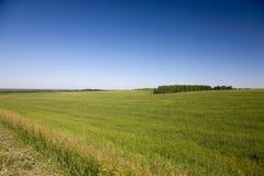 gräsäng Arkivfoto