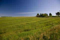 gräsäng Royaltyfri Foto
