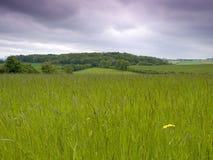 gräs- äng Royaltyfri Fotografi
