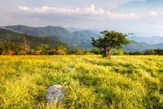 Gräs- äng på den Appalachian slingan norr Carolina Tennessee royaltyfri foto