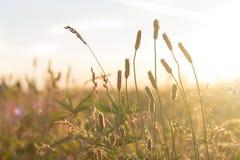 Gräs- äng på solnedgången Arkivbild