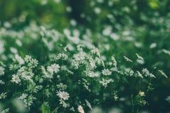Gräs är en ört Arkivbilder