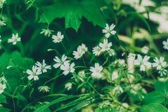 Gräs är en ört Fotografering för Bildbyråer