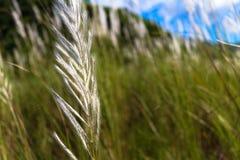 Gräs är skönhet fotografering för bildbyråer