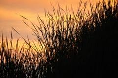 Gräs över sjön på solnedgången Fotografering för Bildbyråer