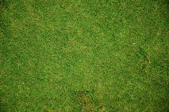 gräs 001 Royaltyfri Fotografi