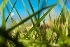 Gräs 1 arkivbild