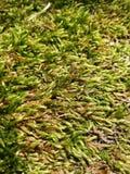 gräs- royaltyfri foto