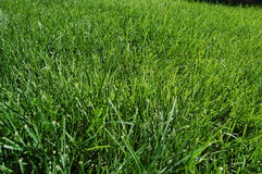 gräs 2 Arkivbilder