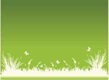 gräs Arkivbild