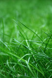 gräs Royaltyfria Bilder