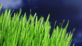 Gräs stock video