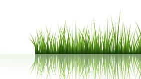 gräs royaltyfri illustrationer