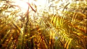 Gräs arkivfilmer