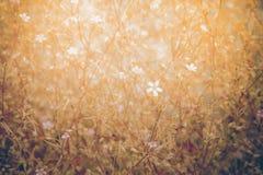 Gräs Fotografering för Bildbyråer