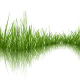 gräs Vektor Illustrationer