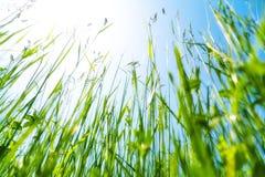 gräs royaltyfria foton