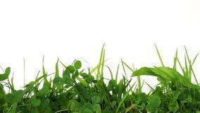 Gräs lager videofilmer