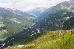 Gräs- alpina ängar i Kaukasuset Arkivbilder