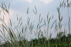 Gräs av fältet Arkivbilder