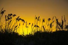 Gräs av sanddyn, gul solnedgång, Key Biscayne Florida, USA fotografering för bildbyråer
