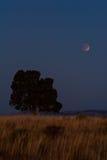Gräs- backe, träd och måne arkivbilder