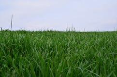 Gräs Backgorund Arkivfoto