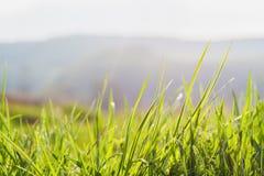 Gräs bakgrund, gräsplan, natur, vår, gräsmatta, sommar, tillväxt, morgon Fotografering för Bildbyråer