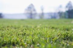 Gräs bakgrund, gräsplan, natur, vår, gräsmatta, sommar, tillväxt, morgon Royaltyfria Bilder