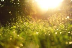 Gräs bakgrund på en solig dag under solnedgång Royaltyfri Bild