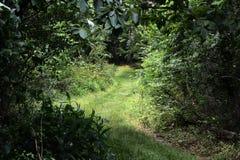 gräs- bana royaltyfri foto