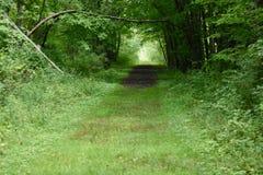 Gräs- bana i en Pennsylvania trän Arkivfoto