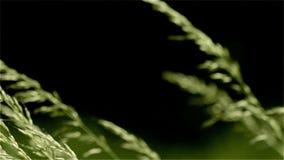 Gräs betar, ängen, vind, gunga, gräsplan arkivfilmer