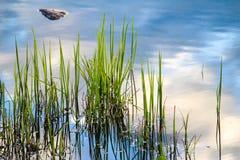 Gräs bevattnar in royaltyfri fotografi