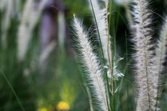 Gräs blomman Royaltyfri Bild