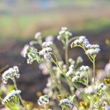 Gräs blomman Fotografering för Bildbyråer