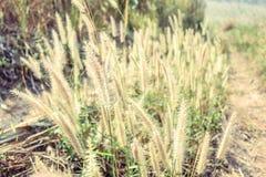 Gräs blomman Arkivbild