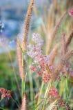 Gräs blomman Royaltyfri Foto