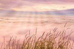 Gräs blomman med soluppgångbakgrund för blå himmel och havsmist Arkivbilder
