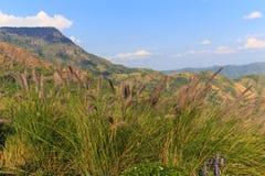 Gräs blomman på berget med moln och blå himmel Royaltyfria Bilder