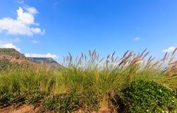 Gräs blomman på berget med moln och blå himmel Fotografering för Bildbyråer