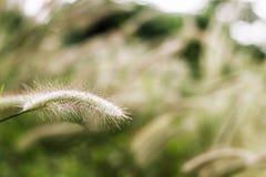 Gräs blomman på solnedgången med berglandskapbakgrund i den gröna naturen, solljus för inverkan för gulingblommagräs royaltyfri fotografi