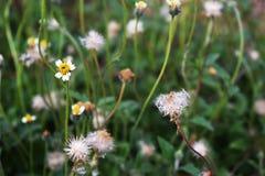 Gräs blommar bakgrund, fält & ängar Royaltyfri Fotografi