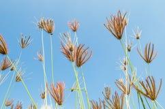 Gräs blommar i fält Arkivbild