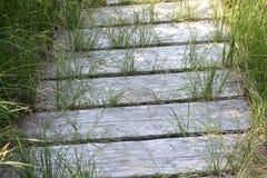 Gräs- Boardwalk Fotografering för Bildbyråer