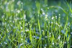 Gräs dagg, grön färg, närbild, droppe royaltyfria bilder