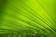 gräs den våta makroen royaltyfri foto