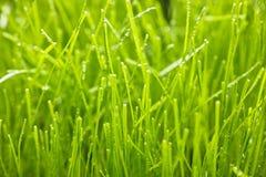 gräs den våta makroen arkivfoto